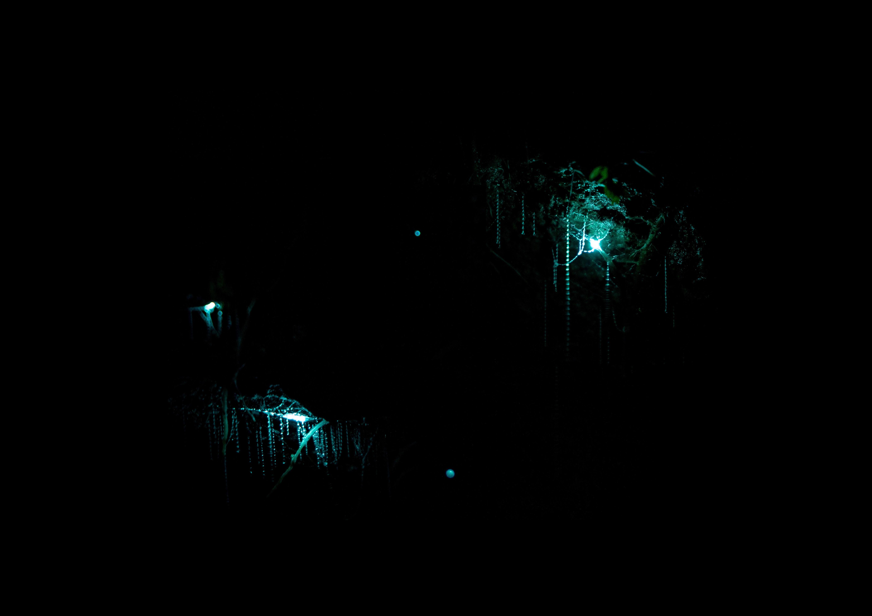 Waitomo Caves Photo by Tomáš Malík