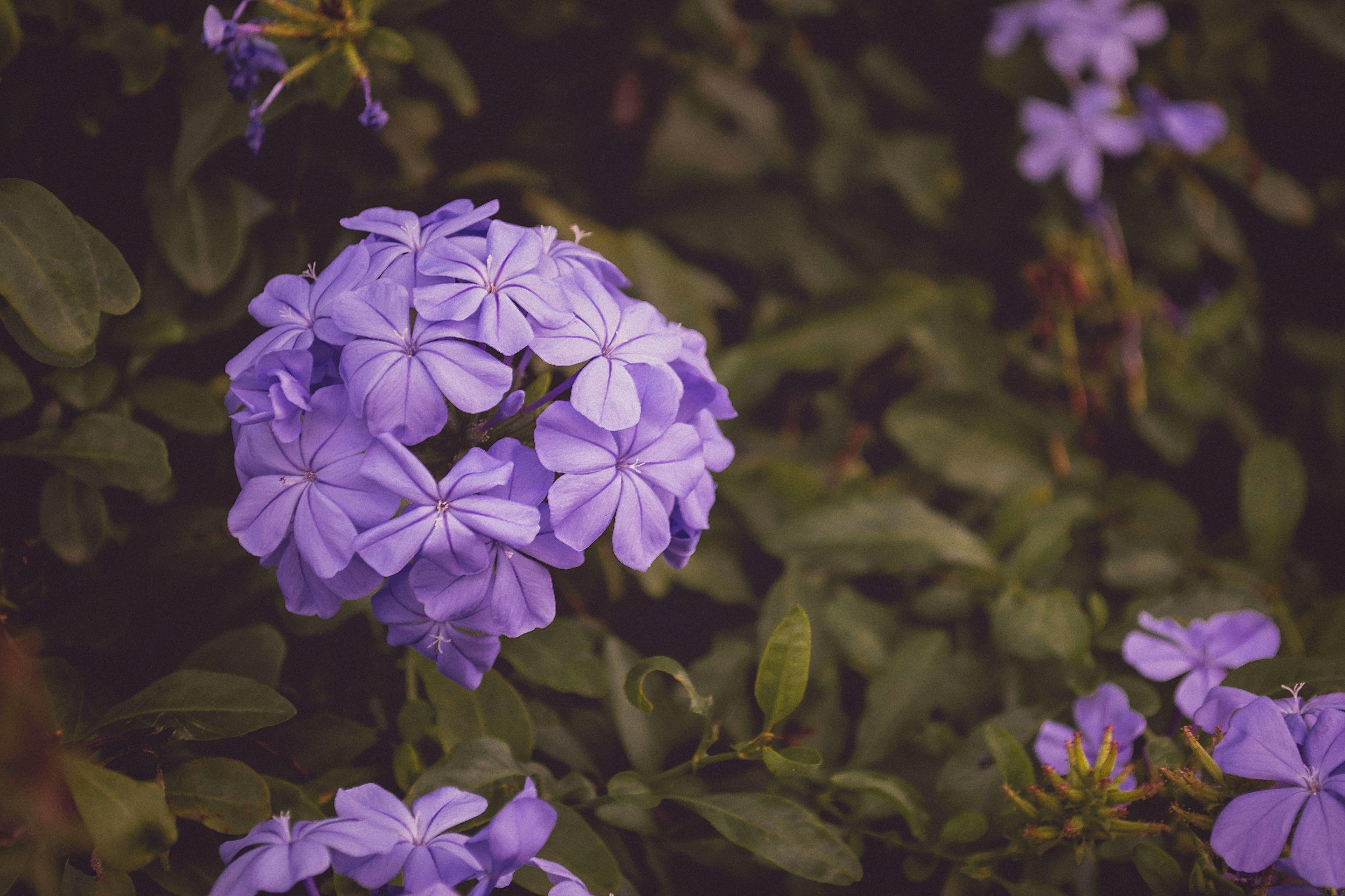 Purple-Bloom-Jean-Vasquez