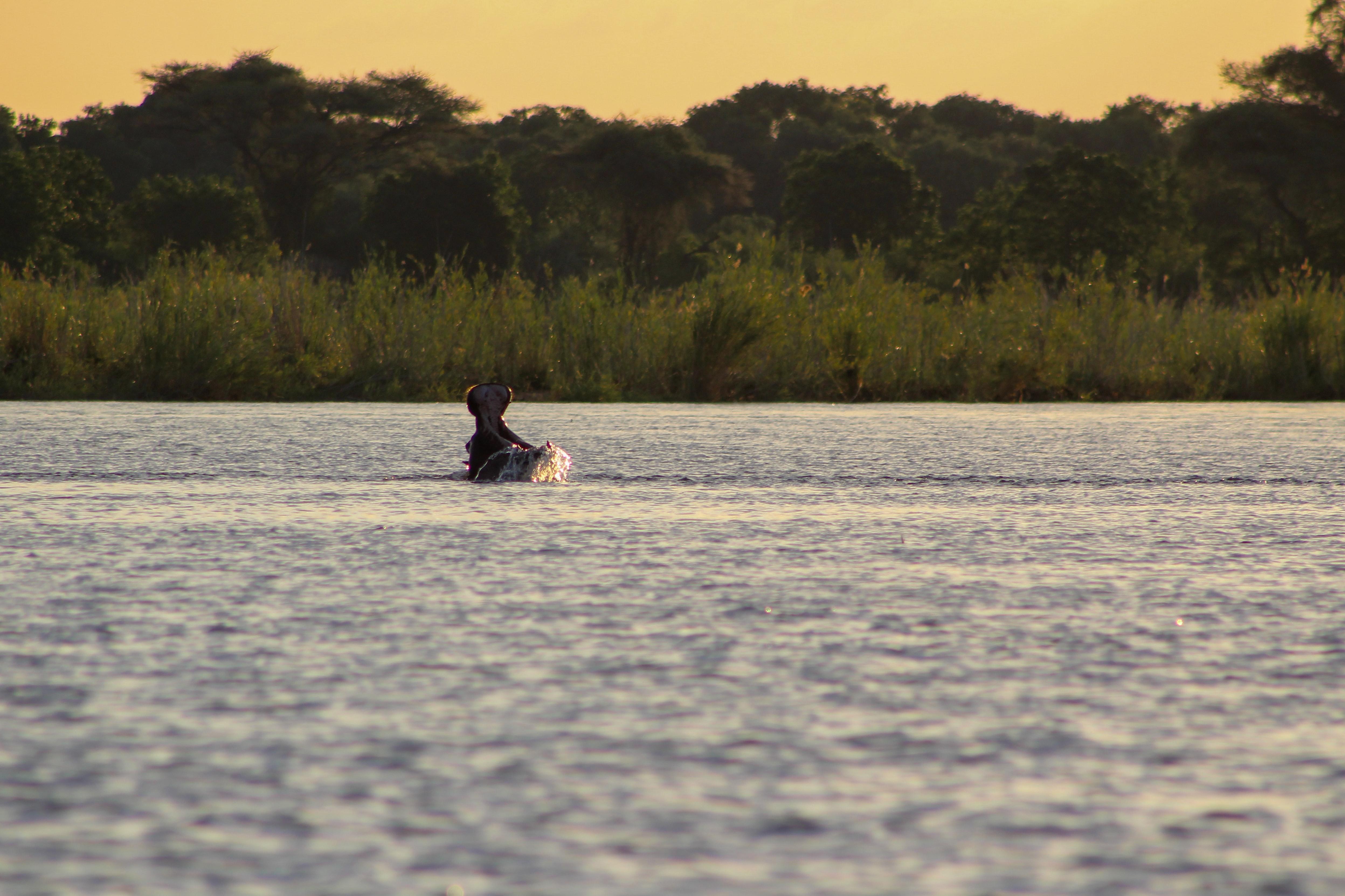 Zambezi-River-Zambia-Sean-Peter