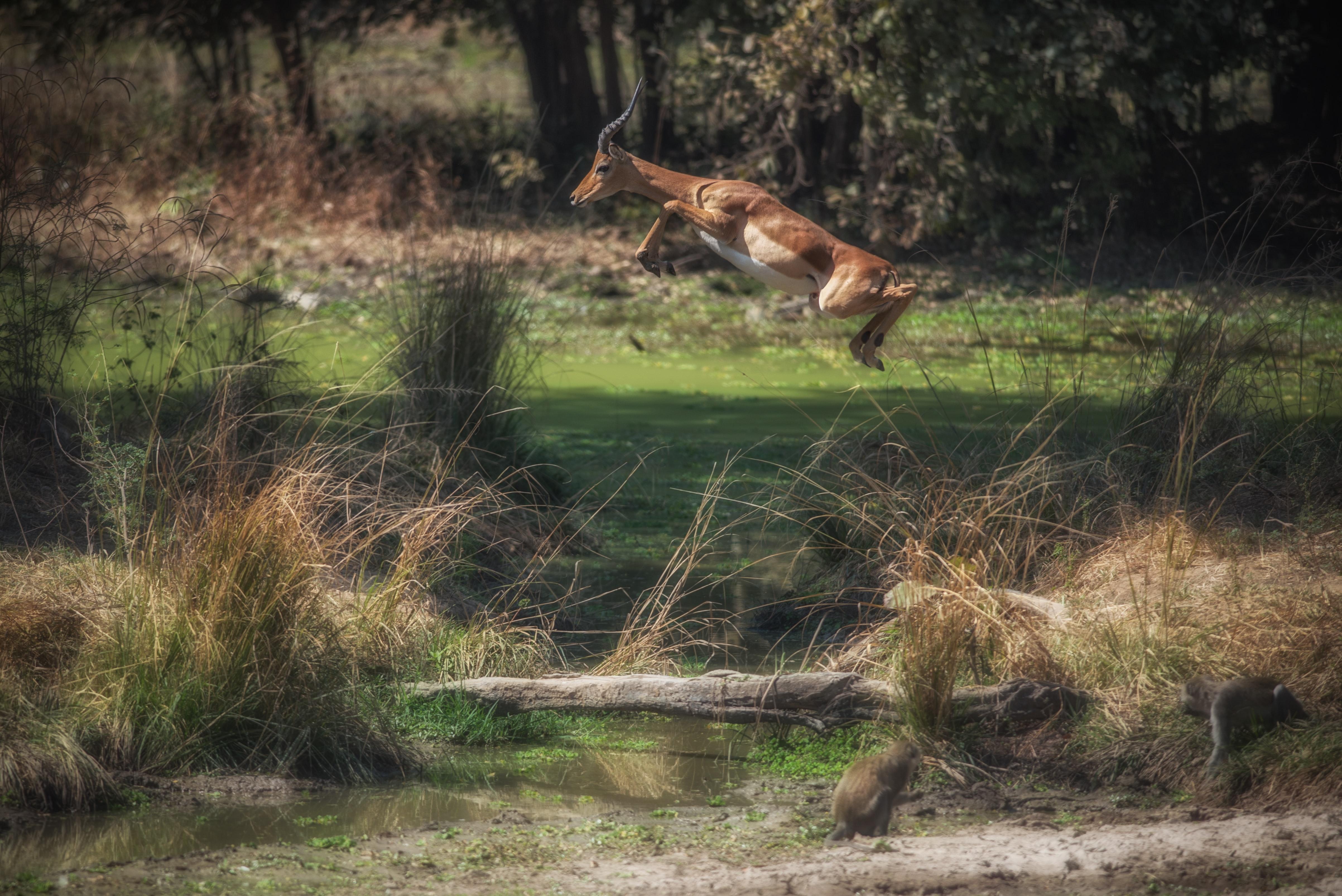 South-Luangwa-National-Park-Zambia-Africa-Johanneke-Kroesbergen-Kamps